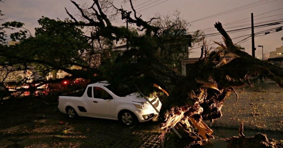 8.set.2015 - Chuva e fortes ventos derrubam árvore na rua Harmonia na Vila Madalena, na zona oeste de São Paulo
