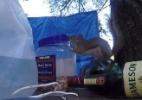 Que espertinho! Esquilo aprende a abrir pote para furtar castanhas (Foto: Reprodução/LiveLeak)