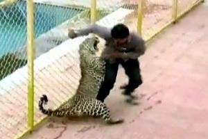 Leopardo invade escola e fere seis pessoas na Índia (Foto: BBC)