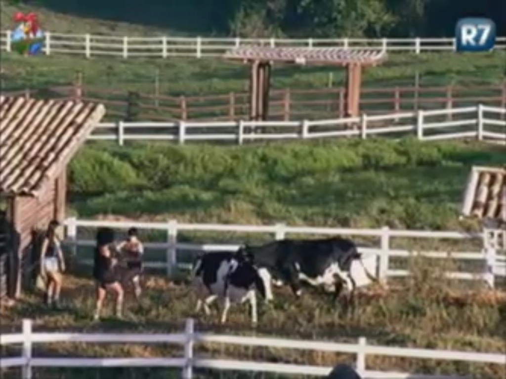 Shayene, Simone e Penélope têm dificuldade para cuidar da vaca (4/6/12)
