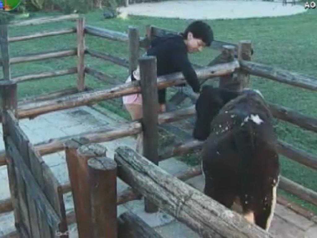 Penélope Nova cuida da vaca (17/6/12)