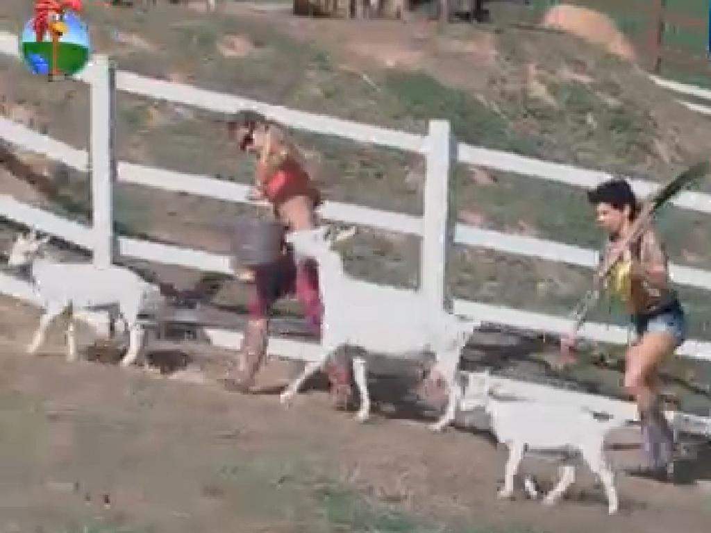 Cabras seguem Robertha Portella e Penélope Nova no pasto (11/7/12)