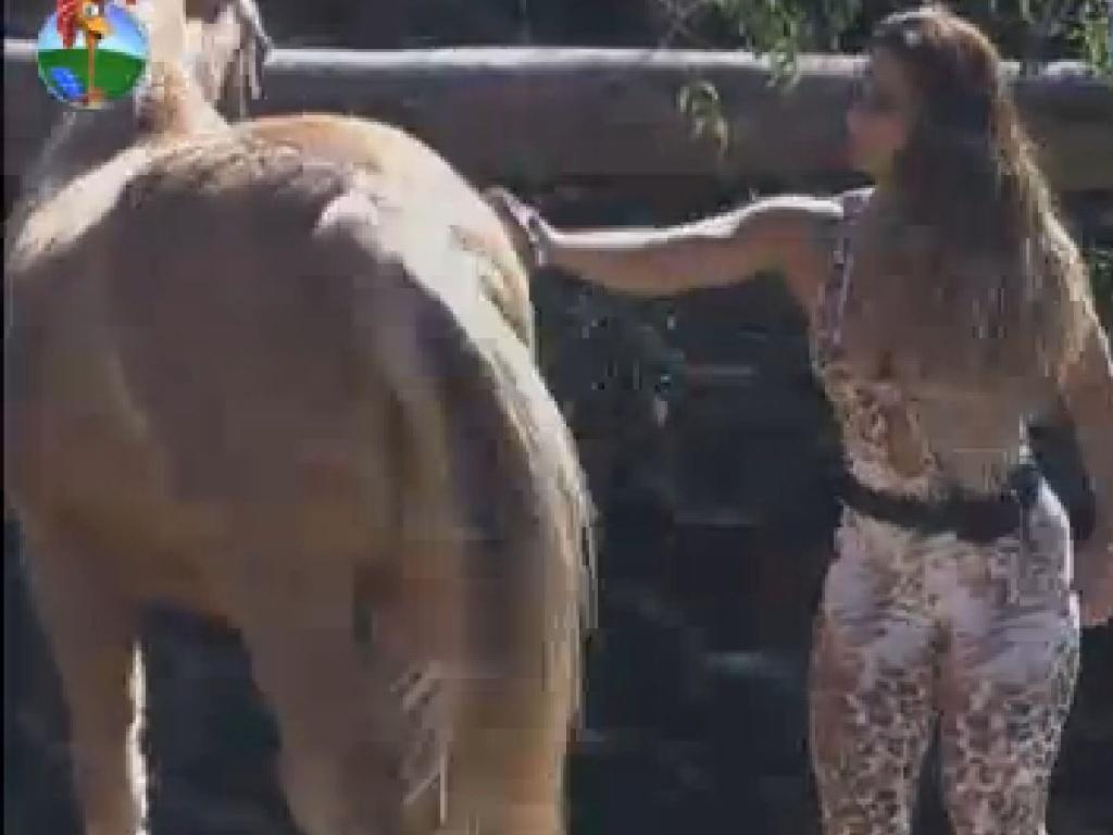 Viviane Araújo escova cavalo (21/7/12)