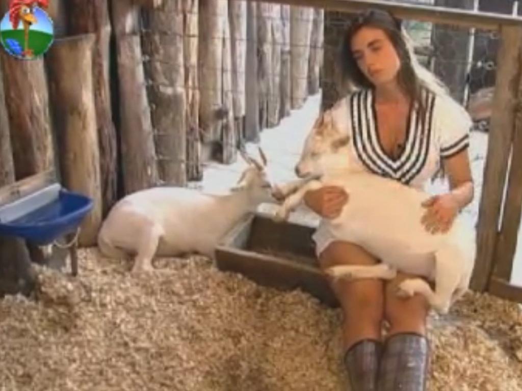 A cabra Pietra dorme no colo de Nicole Bahls, que descansa com os animais (5/8/12)