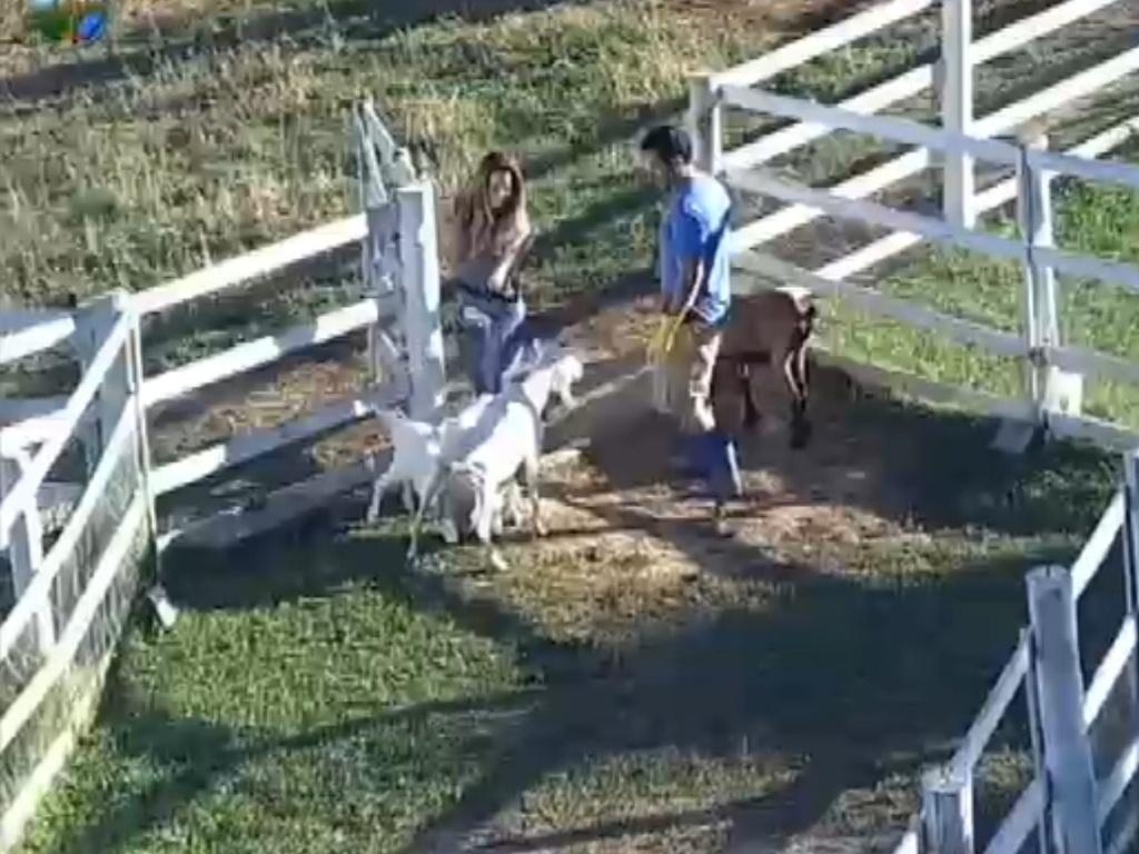 Viviane Araújo e Felipe Folgosi observam cabras mamando na manhã deste domingo (12/8/12)