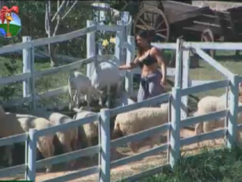 Nicole Bahls se atrapalha e deixa cabras fugirem (14/8/12)