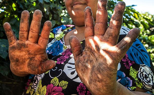 Trabalhadora em cafezal em Minas Gerais. Foto: Lilo Clareto/DanWatch