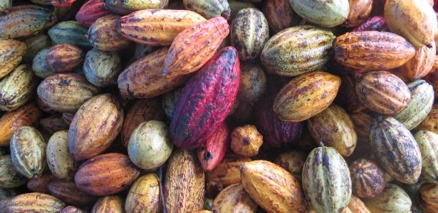 Cacau de fazenda de Ilhéus (BA); para ser considerado chocolate, produto precisa ter ao menos 25% do fruto