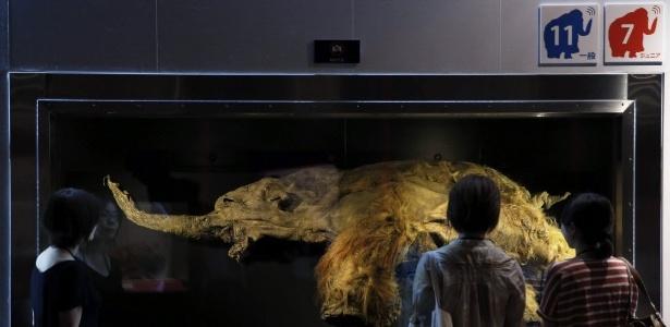 Público observa mamute-lanoso de 39 mil anos, exposto em museu do Japão em 2013