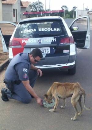 PM Lauro Miller alimenta um cachorro abandonado em rua de Penápolis (SP)